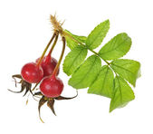 Branch with rose hips — Stock Photo