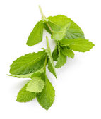 Mint sprigs — Stock Photo