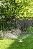 Lawn sprinkler watering grass — Stock Photo