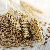整粒小麦籽粒特写 — 图库照片