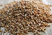 Whole grain wheat kernels closeup — Stock Photo