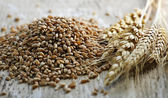 Grains entiers wheat kernels closeup — Photo