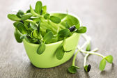 Green sunflower sprouts in a cup — Stok fotoğraf