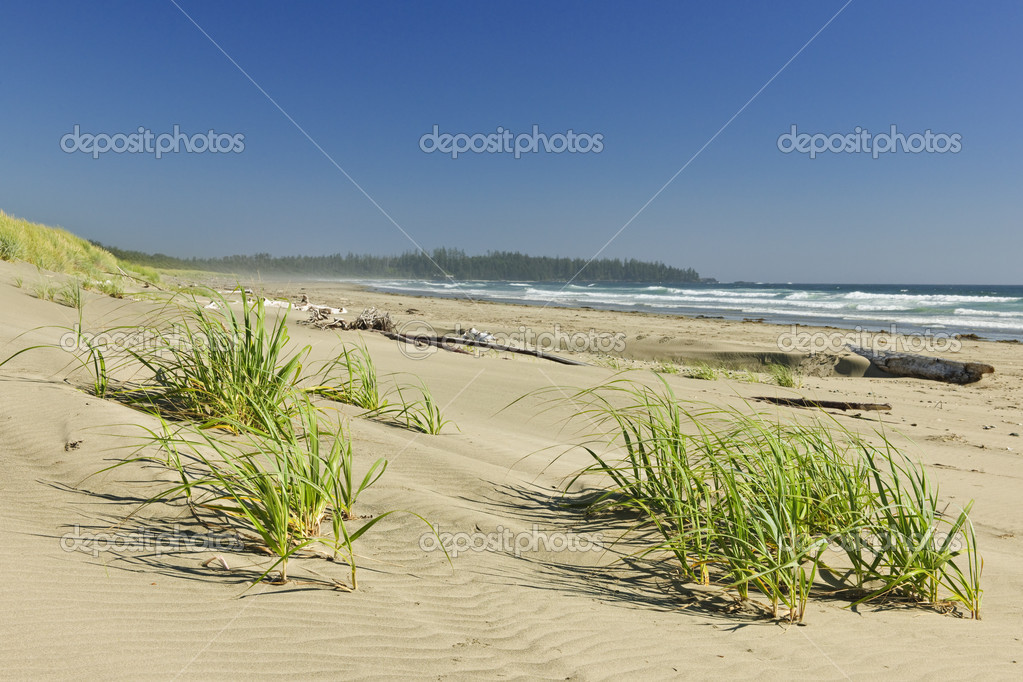 Sand dunes on Long Beach in Pacific Rim National park, Canada — Stock Photo #4465910
