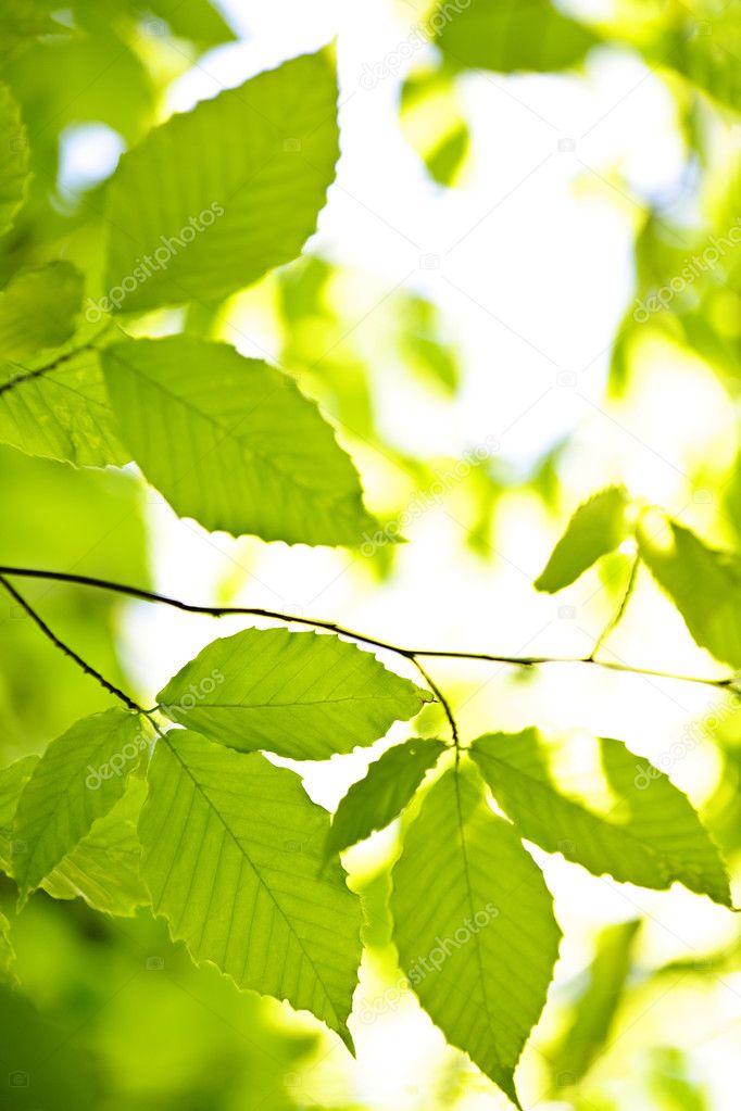 Green spring leaves — Stock Photo © elenathewise #4467538