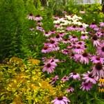 Residential garden landscaping — Stock Photo #4471018