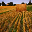 Farm field at dusk — Stockfoto