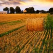 Stok fotoğraf: Golden sunset over farm field