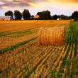 Golden sunset over farm field — Stock fotografie
