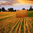 Golden sunset over farm field - Stock Photo