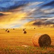 Golden sunset over farm field - Stockfoto