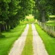 Farm road — Stock Photo