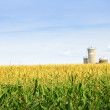 Corn field with silos — Stock Photo #4471059