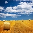 Stock Photo: Farm field with hay bales