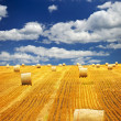 Farm field with hay bales - Stock Photo