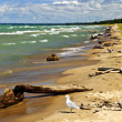 Beach with driftwood - Photo