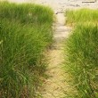 Path to beach - Stock Photo