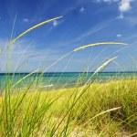 Sand dunes at beach — Stock Photo