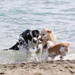 Three dogs playing on beach - 