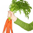 Hand holding carrots — Stock Photo