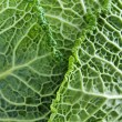 Closeup of green cabbage leaves — Stock Photo
