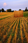 Farm field at dusk — Stock Photo