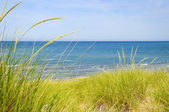 Sand dunes at beach — Foto Stock