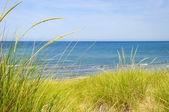 在海滩的沙丘 — 图库照片