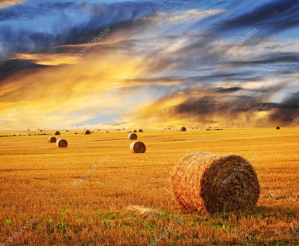 Golden sunset over farm field with hay bales  Stok fotoraf #4471035