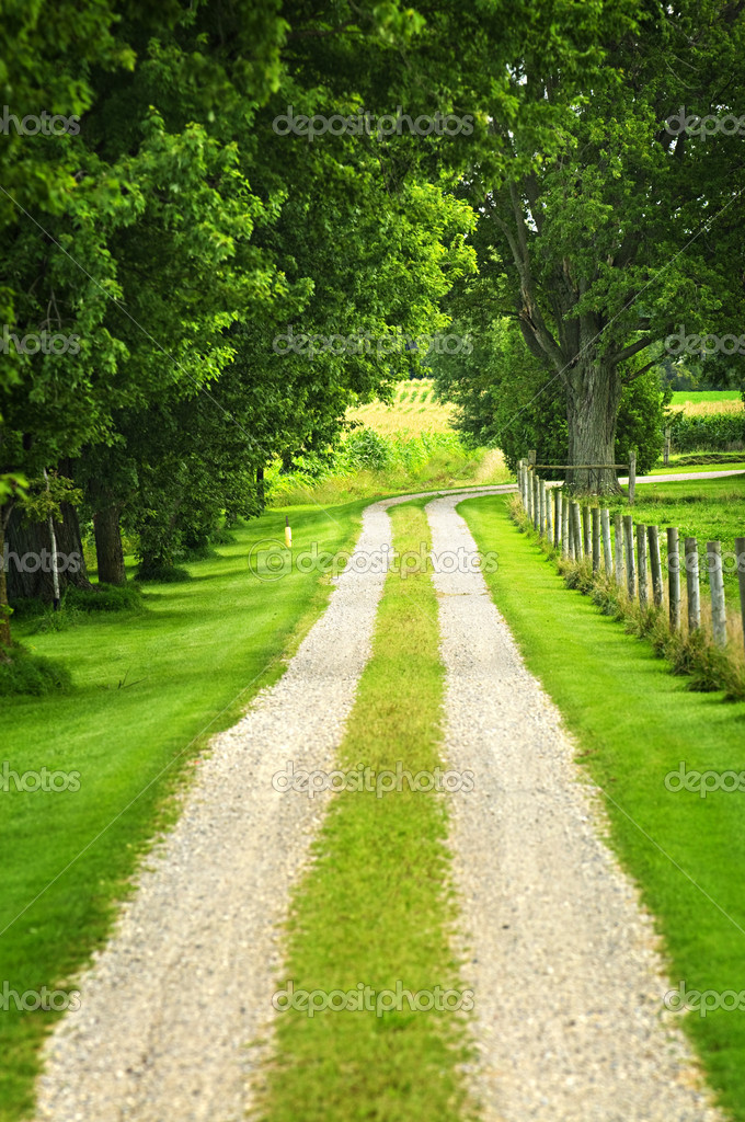 Rural road on small scale sustainable farm with trees and fence — Stock Photo #4471049