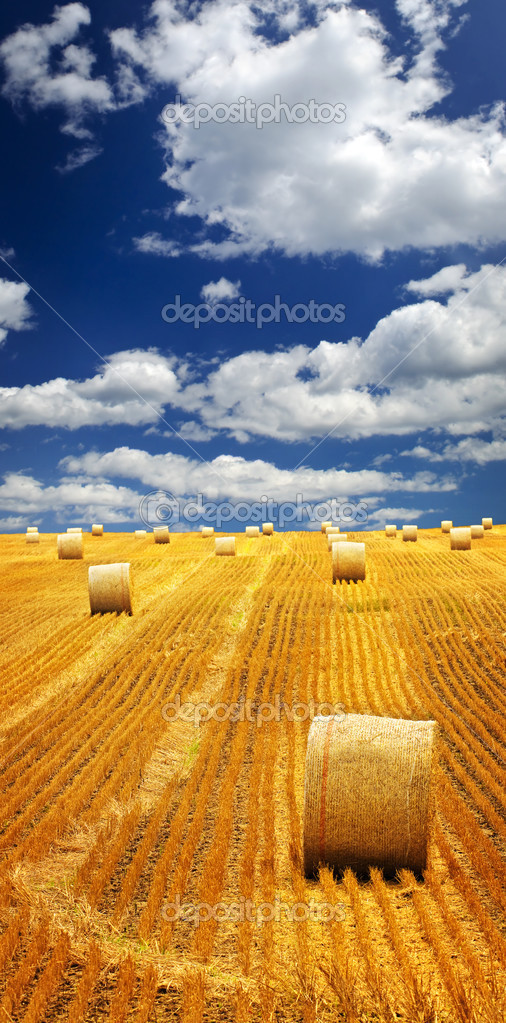 Agricultural landscape of hay bales in a golden field — Stock Photo #4471102