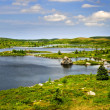 Beautiful lake shore in Newfoundland — Stock Photo