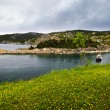 Atlantic coast in Newfoundland — Stockfoto