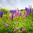 Purple and pink wildflowers - Stock Photo