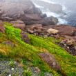 Atlantic coast in Newfoundland — Stock Photo