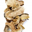 dry porcini mushrooms — Stock Photo