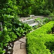 Lush green garden — Stock Photo #4483173