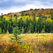 Fall forest — Stock Photo #4483232
