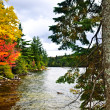 Fall forest and lake shore — Stok fotoğraf