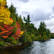 Foto Stock: Fall forest and lake shore