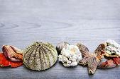Sea treasures — Stock Photo