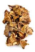 Dry chanterelle mushrooms — Stock Photo