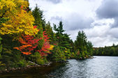 Bos en lake shore vallen — Stockfoto