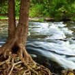 River through woods - Stock Photo