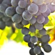 Red grapes — Stock Photo #4495186