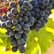 Stockfoto: Red grapes