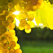 Yellow grapes — Stock Photo