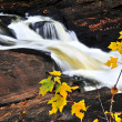 Stock Photo: Forest river in fall