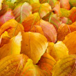 Autumn leaves background — Stock Photo #4495544