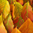 Autumn leaves background — Stock Photo